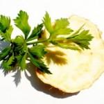 Celer biljka začin lekovitost