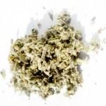 Žalfija biljka lekovitost i upotreba