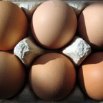 Belanca jaja u prahu proteini za mišićnu masu